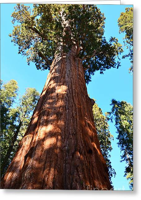 General Sherman Tree, Sequoia National Park, California Greeting Card