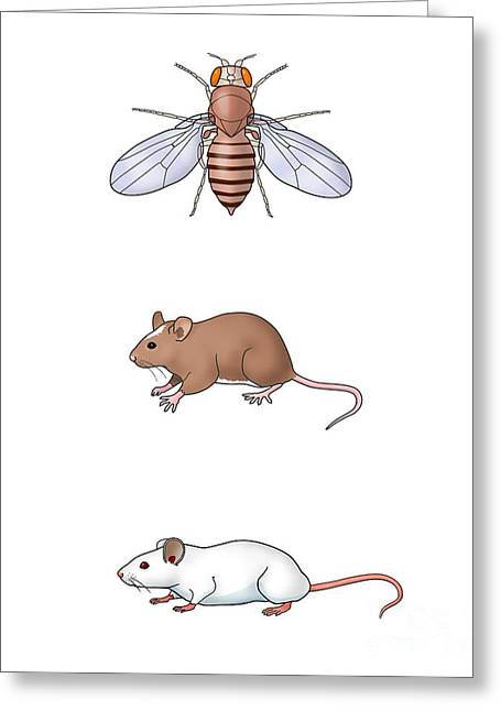Genetic Icons, Illustration Greeting Card by Carlyn Iverson