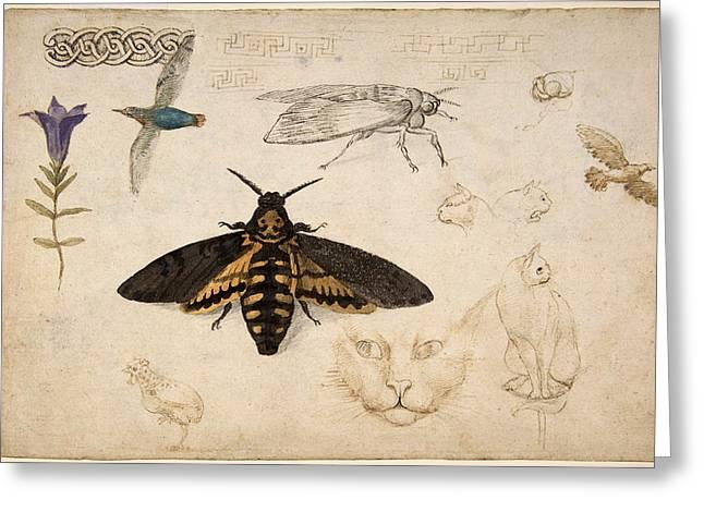 Gentian, Moth, Birds, Cats, C. 1535 Greeting Card