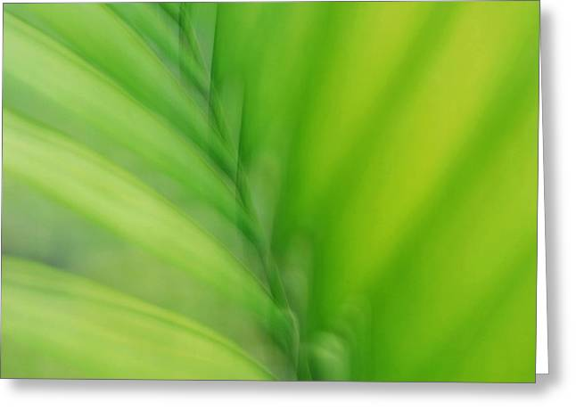 Greeting Card featuring the photograph Gentle Breeze by Lorenzo Cassina