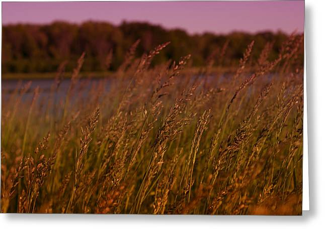 Gentle Breeze Greeting Card by Miguel Winterpacht