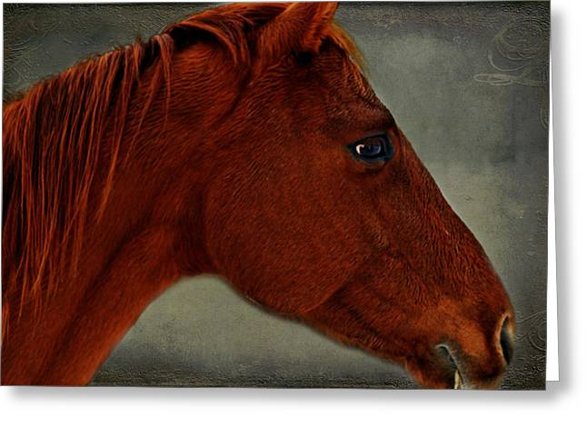 Gentle Red Greeting Card by Linda Segerson