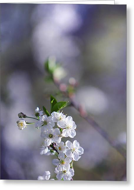 Gentle Touch Of Spring Greeting Card