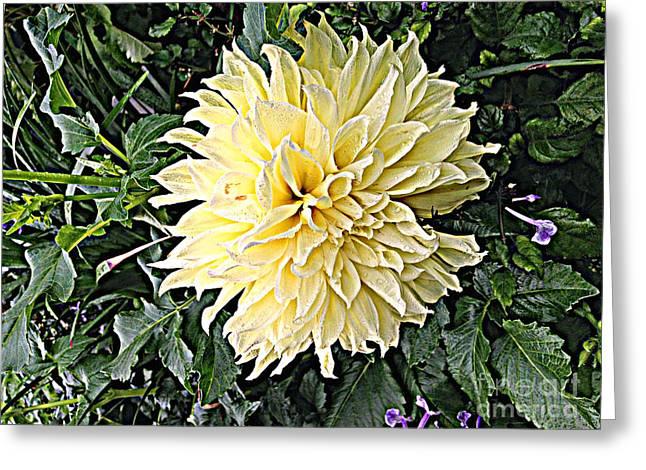 Gentleness In The Garden Greeting Card