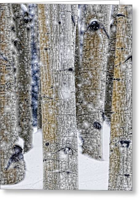 Gently Falling Forest Snow Greeting Card by Don Schwartz