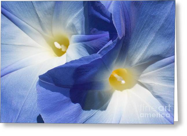 Gently Unfolding Greeting Card