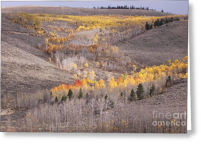 Geometric Autumn Patterns In The Rockies Greeting Card by Kate Purdy