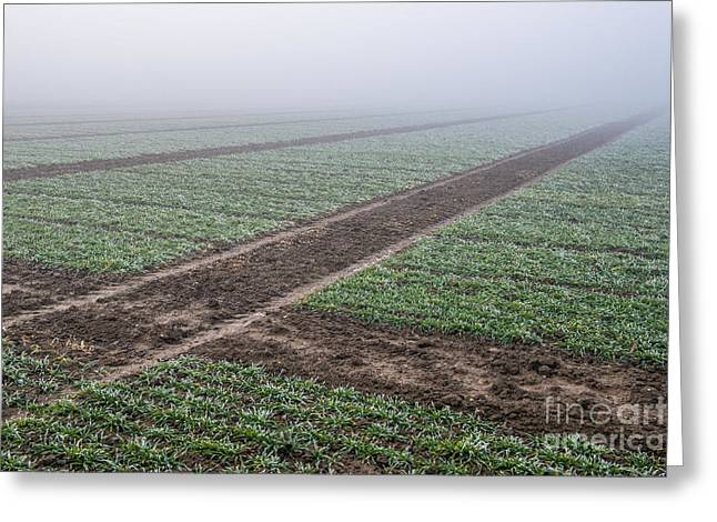 Geometry In Agriculture Greeting Card by Hannes Cmarits