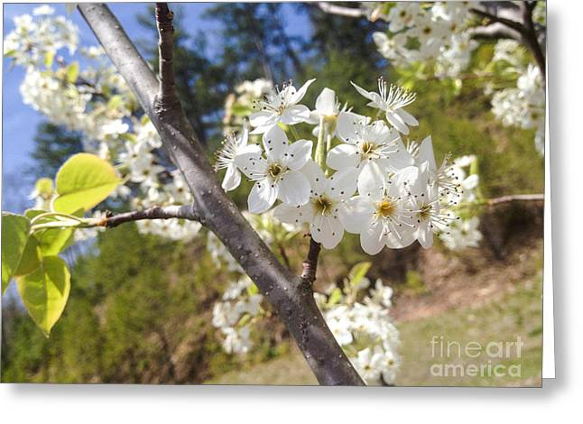 Georgia Blossoms Greeting Card by Jan Dappen