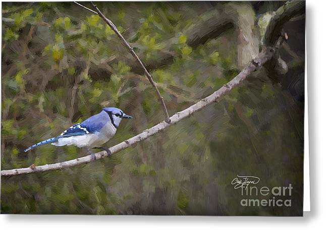 Georgia Bluejay In Spring Greeting Card by Cris Hayes