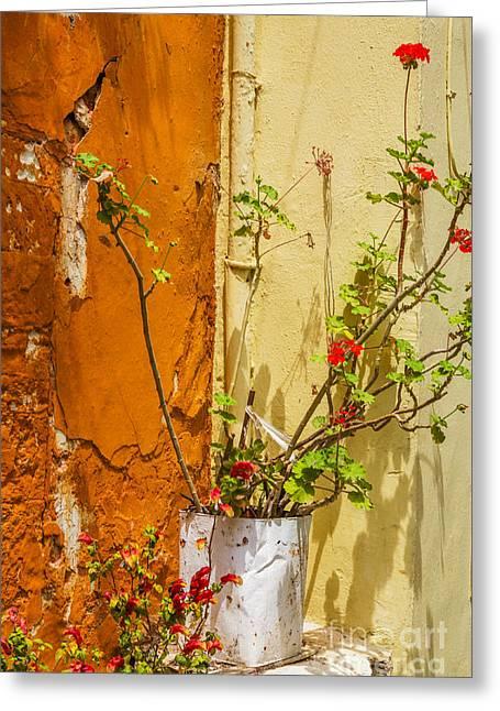 Geranium In Mediterranean Corner Greeting Card