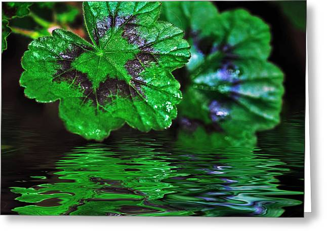 Geranium Leaves - Reflections On Pond Greeting Card by Kaye Menner