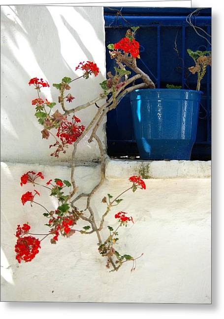 Geraniums In Blue Pot In Greece Greeting Card by Andy Fletcher