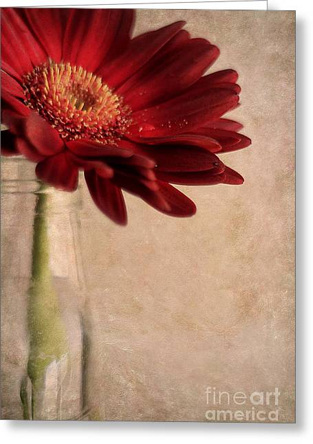 Gerber 02 Greeting Card by Darren Fisher