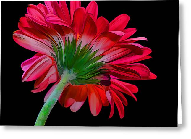 Gerber Daisy Greeting Card by Hazel Billingsley
