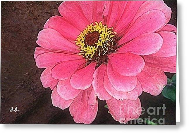 Greeting Card featuring the photograph Gerber Pink by Geri Glavis