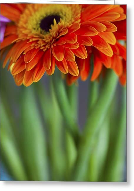 Gerbera Daisies In A Vase Greeting Card by Zoe Ferrie