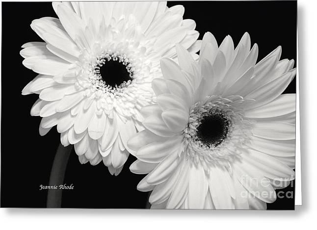 Gerbera Daisy Sisters Greeting Card