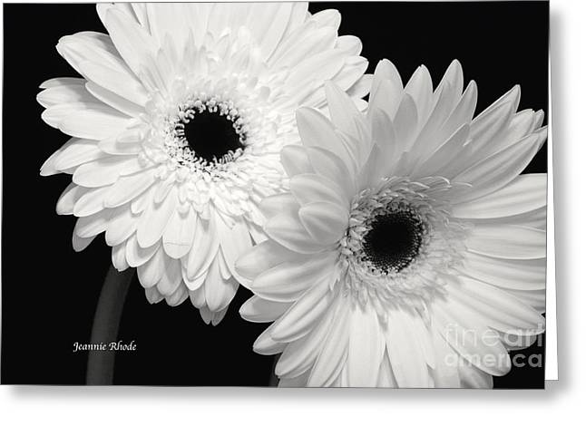 Gerbera Daisy Sisters Greeting Card by Jeannie Rhode