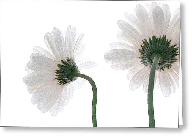 Gerbera Daisy I Greeting Card