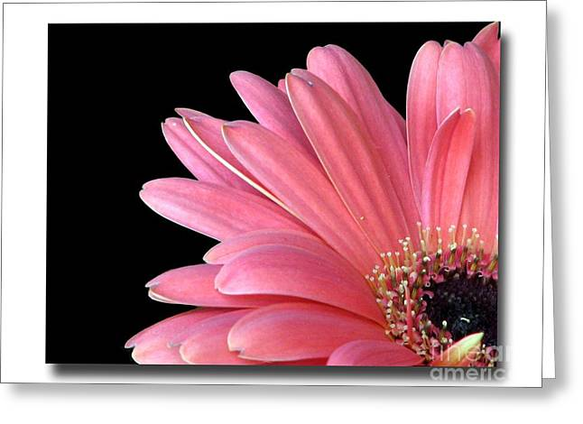 Greeting Card featuring the photograph Gerbera Encore by Chris Anderson