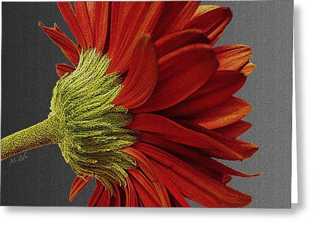 Gerbera In Red Greeting Card by Megan Washington