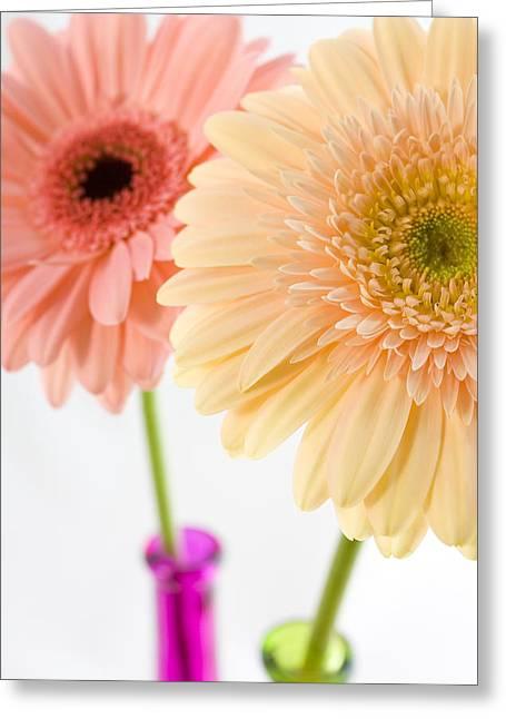 Peach And Pink Gerbera Greeting Card