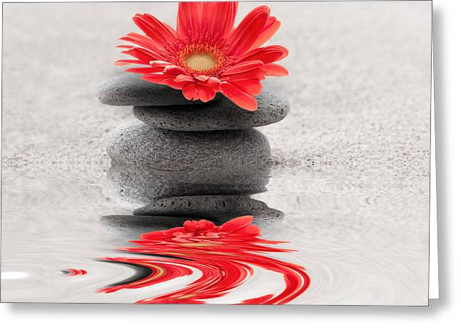 Gerbera Reflection Greeting Card by Delphimages Photo Creations
