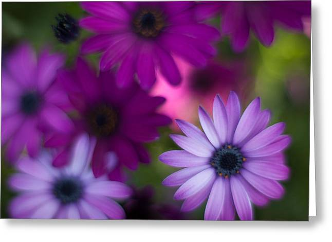 Gerbera Soft Layers Greeting Card by Mike Reid