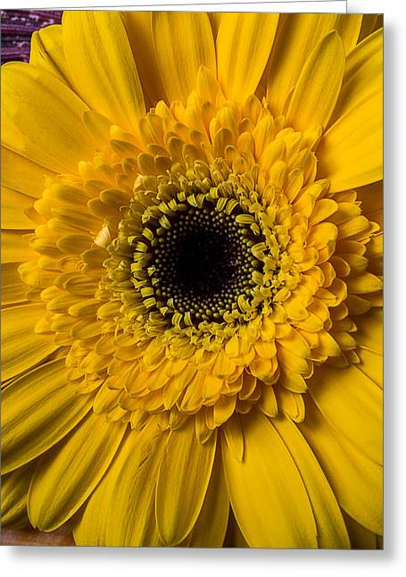 Gerbera Yellow Daisy Greeting Card by Garry Gay