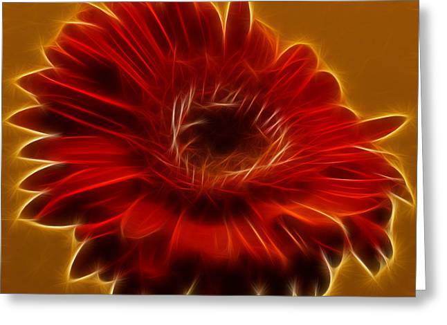 Gerbia Daisy Greeting Card by Bill Barber