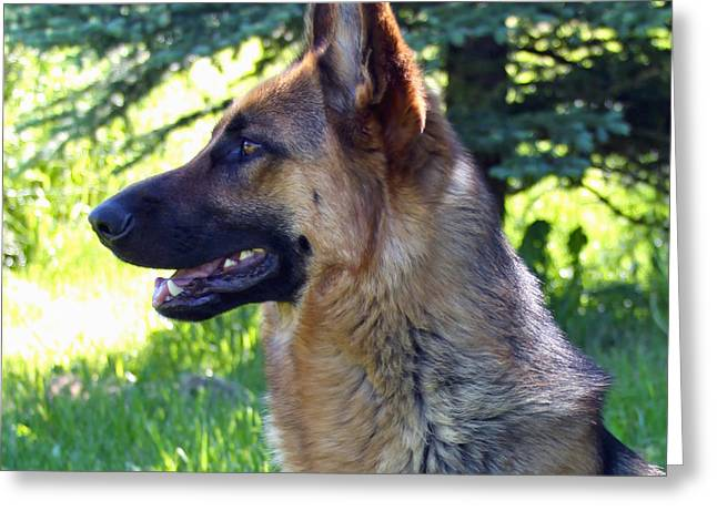 German Shepherd Dog Female Greeting Card by Karon Melillo DeVega