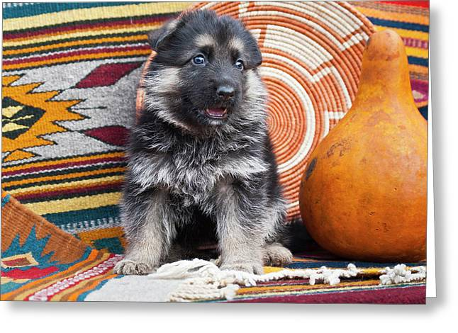 German Shepherd Puppy Sitting Greeting Card by Zandria Muench Beraldo