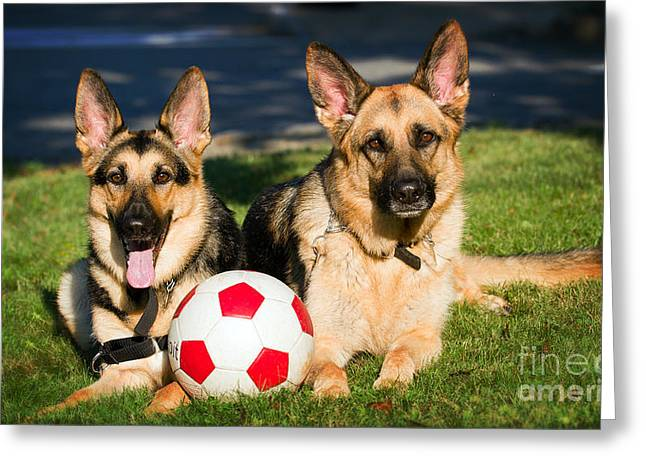 Greeting Card featuring the photograph German Shepherd Sisters by Eleanor Abramson