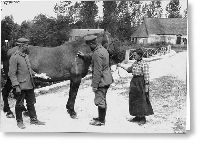 German Vet Treats French Horse Greeting Card by Underwood Archives