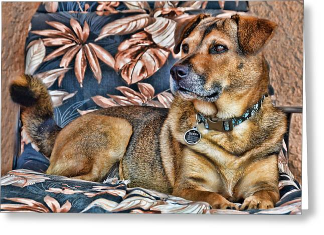 Gerry And The Lounge Chair Greeting Card by Barbara Manis