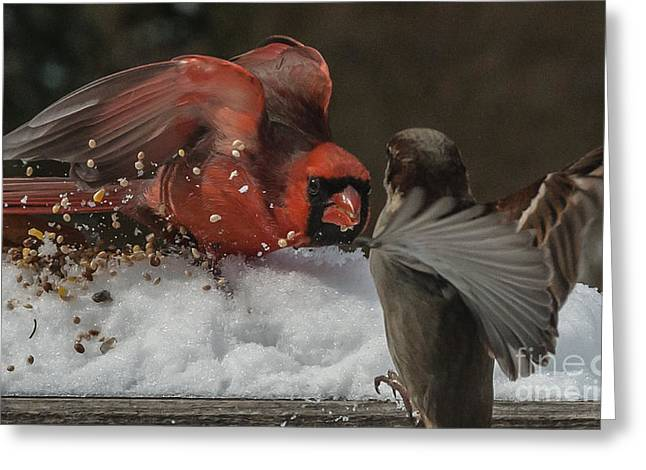 Get Off My Feeder Greeting Card