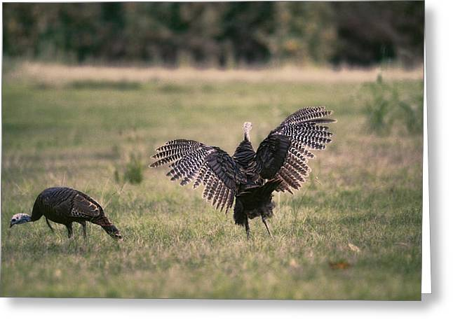 Get Up And Dance - Turkey Greeting Card by Jai Johnson