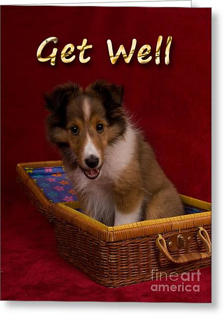 Get Well Sheltie Puppy Greeting Card by Jeanette K
