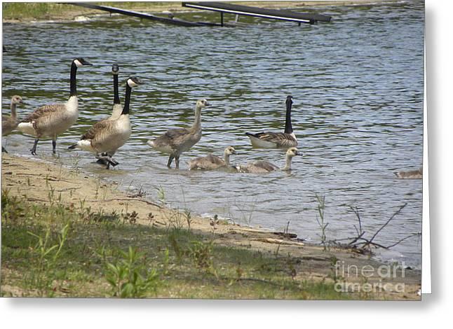 Getting Our Feet Wet Greeting Card by Cim Paddock