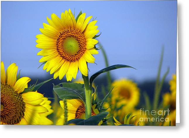 Getting To The Sun Greeting Card by Amanda Barcon