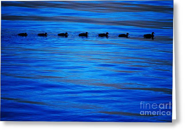 Greeting Card featuring the photograph Getting Your Ducks In A Row by Cynthia Lagoudakis