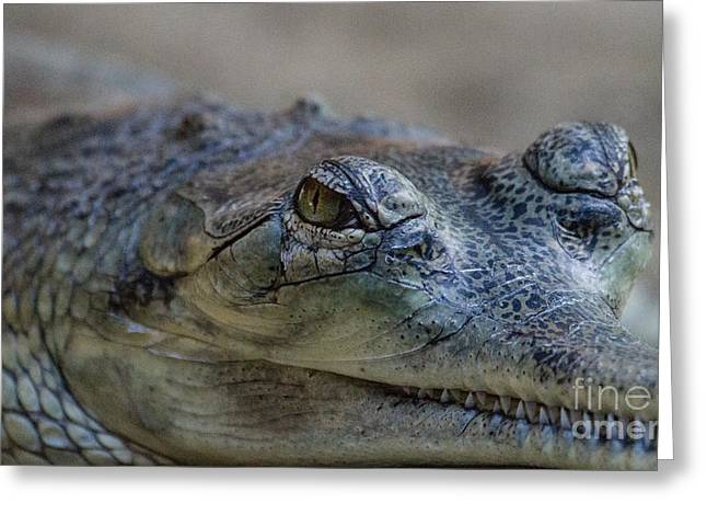 Gharial Smile Greeting Card by Ruth Jolly