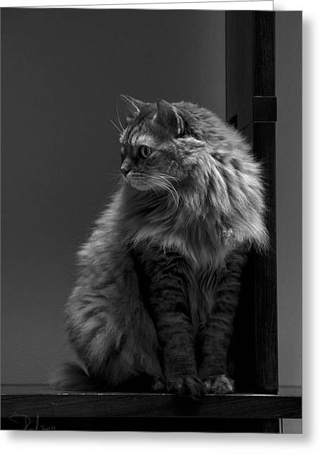 Ghiga Posing In Black And White Greeting Card
