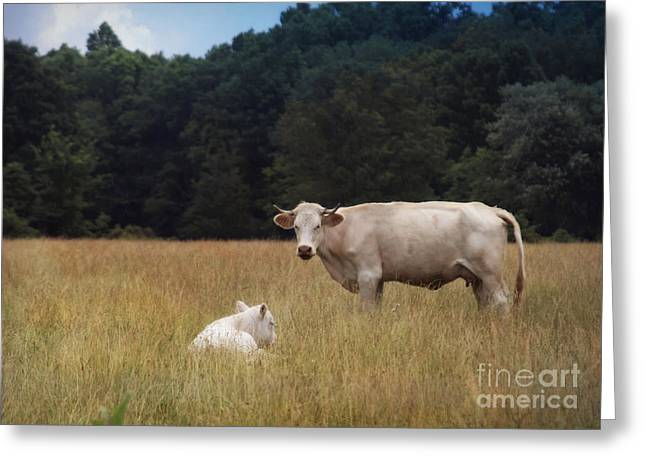 Ghost Cow And Calf Greeting Card
