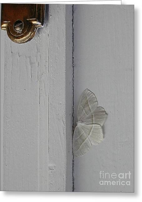 Ghost Doorbell Moth Greeting Card