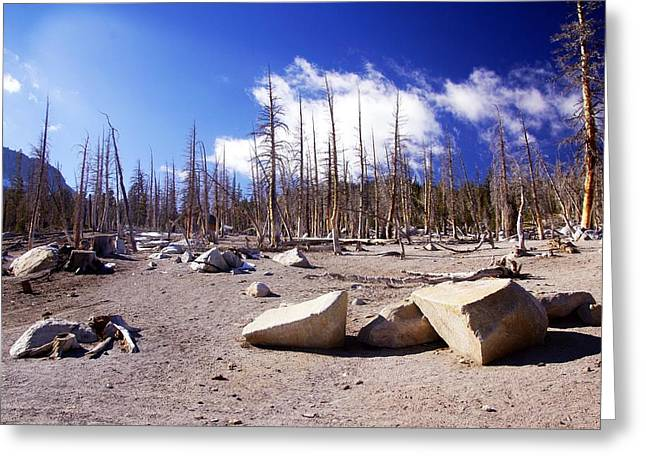 Ghost Forest 3 Greeting Card by Michael Courtney