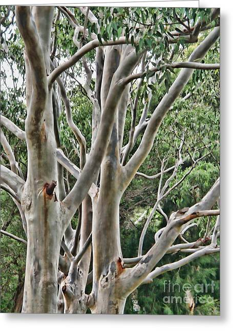 Greeting Card featuring the photograph Ghost Gums by Trena Mara