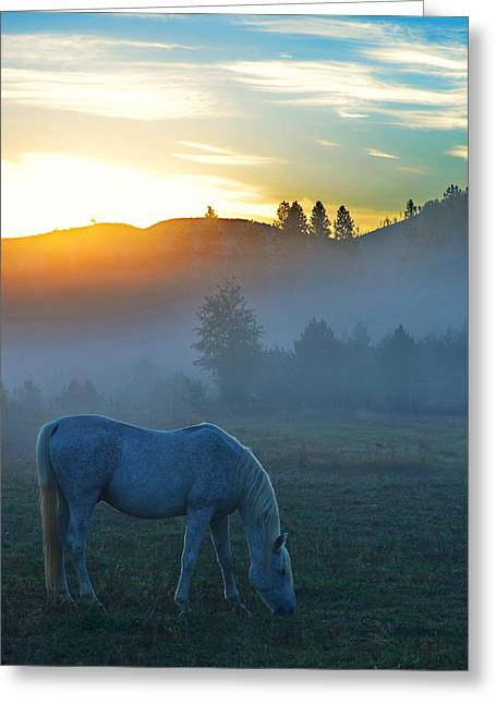 Ghost Horse Greeting Card by Annie Pflueger