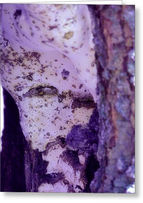 Ghost In The Tree Greeting Card